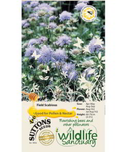 Wildlife Garden - Field Scabious-0