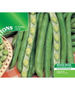 Bean Broad Bean Giant Exhibition Longpod-0