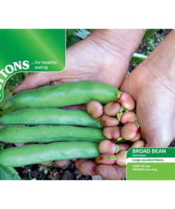 Bean Broad Bean Karmazyn-0