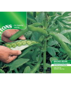 Bean Broad Bean Masterpiece Green Longpod-0