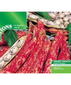 Bean Dwarf French Bean Borlotto Firetongue-0