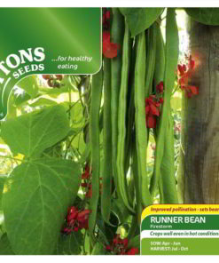 Bean Runner Bean Firestorm-0