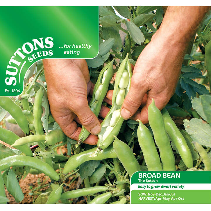 Böna Bean ´Broad The Sutton`- Suttons Seeds