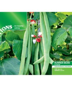 Böna Bean ´Runner St George`- Suttons Seeds