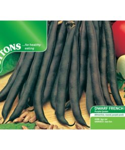 Böna ´Bean Dwarf French - ´Purple Queen` - Suttons Seeds