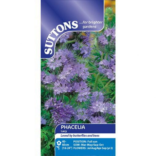 Lavendel 'Phacelia Lacy' - Suttons Seeds-8252