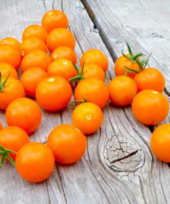Tomat 'Tomato Seeds - F1 Sungold' - Suttons Seeds-0