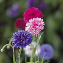 The Flower Bunch Collection - Suttons Seeds